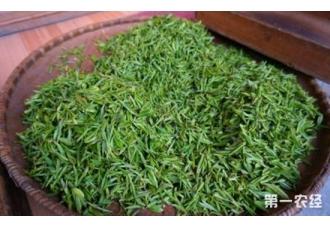 峨眉春语茶是什么茶?
