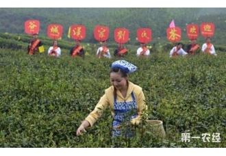 汉家刘氏茶属于什么茶?汉家刘氏茶是绿茶吗?