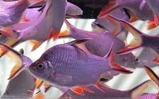 怎么养观赏鱼 观赏鱼养殖要点