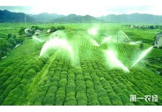 """贵州""""都匀毛尖""""夏季茶园管理与养护"""