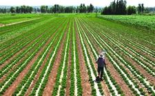 国家重金扶持四大农业产业项目 最高达到1000万元