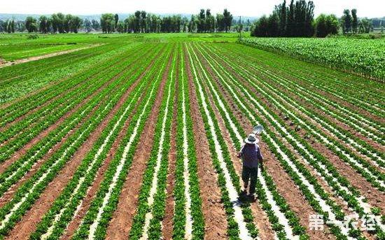 农业秸秆 矢量图