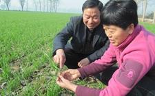 陕西:将科技发展与脱贫攻坚相连接