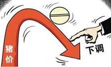 端午节无力支撑猪价上涨 节后猪价行情仍有再跌风险