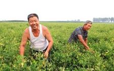 陕西留坝:订单农业模式保证贫困群众增收