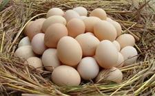 2017年5月26日全国主产区鸡蛋价格走势分析:稳中调整