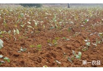 茶树的生长环境与茶树种植条件