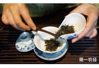 泡茶技巧:泡茶时如何控制茶叶的投放量?
