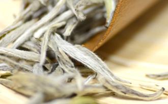 太姥银针是什么茶?太姥银针是白毫银针吗?