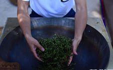 湖南常德:首届手工茶技决赛已经展开