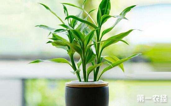 人旺财旺事业旺!5种植适合摆在客厅的盆栽植物介绍!!