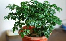 人旺财旺事业旺!5种植适合摆在客厅的盆栽植物