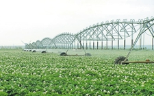 """内蒙古:""""试水""""认养农业 构建现代化农业新格局"""