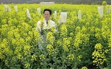 湖南:黄籽油菜新品种打开现代生物技术应用之门