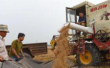 山东5700多万亩小麦陆续开镰收割