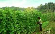 甘肃武山:农家肥种出一片农业新天地
