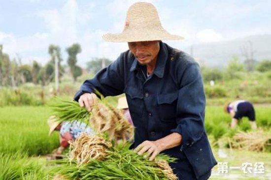 全国十佳农民资助项目申报条件及申报流程