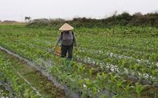 新农药条例6月1日起限制剧毒高毒农药的使用