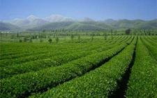 山东:科技助力农村农业产业发展