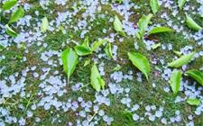 陕西:遭受大风冰雹直接经济损失达1亿元