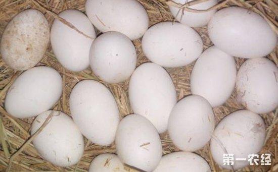 鸡种蛋怎么自然孵化?鸡种蛋的四种人工孵化方法