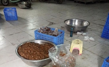湖南郴州:卫生脏乱苍蝇乱飞 一香辣小鱼仔加工黑作坊被取缔