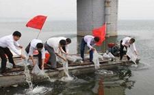 甘肃:同步增殖放流活动放生3.3万余尾鱼苗