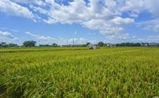 云南祥云:土地流转促进农村农业发展新路径