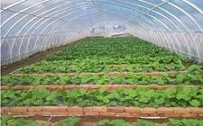 山东蓼兰:智能育苗温室提升农产品竞争力