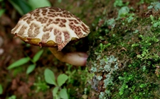 祁阳:一家三口因误食毒蘑菇全部住院 专家:尽量不要吃野生蘑菇
