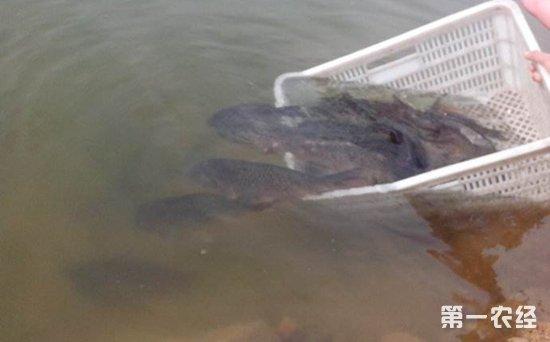 放流濒危保护鱼