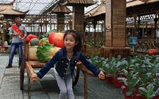 江苏:文化创意与休闲农业的深度融合领跑全国