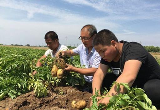 陕西残疾人白东升种植20多亩10多万斤土豆遇滞销 爱心人帮帮忙