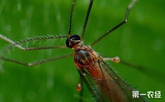 花椒树虫害有哪些?该如何防治?