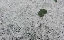河北故城:冰雹灾害造成7451.5亩农作物受灾