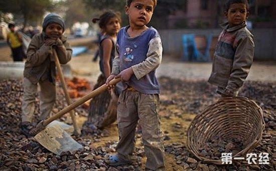 国际劳工组织呼吁各界关注童工问题