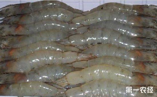 海参苗养殖技术要点_高产优质茉莉园培育技术_高产优质