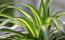 5种适合养在室内的盆栽植物介绍!吸收甲醛净化