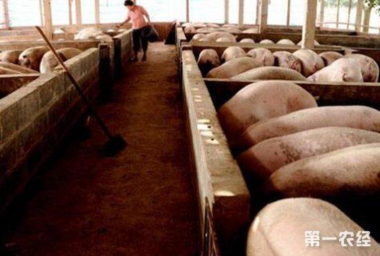 夏季规模化养猪场猪群饲养管理方略