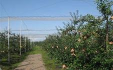 甘肃齐寿:发展林果业描绘出衣服富民景象