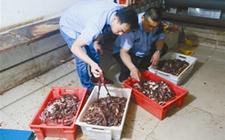内蒙古:现场环境脏乱不堪 一非法生产加工牛肉干黑作坊被查处