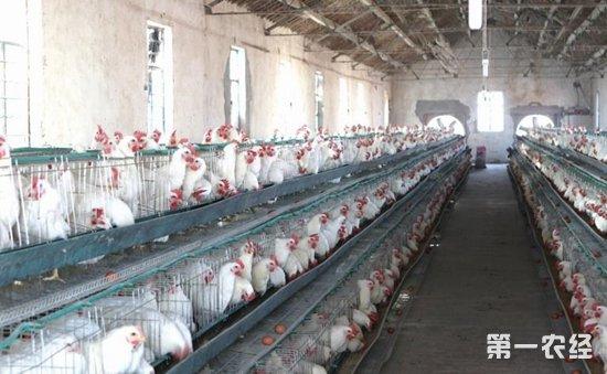 农业部:加快推进畜禽养殖废弃物资源优化利用当保护养殖户利用