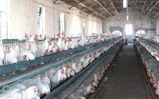 农业部:加快推进畜禽养殖废弃物资源优化利用当保护养殖户利益