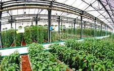 宁夏银川:将废品变为宝发展可循环农业生产