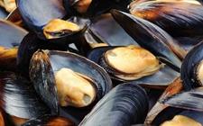 福建:正值赤潮高发期 专家:慎食赤潮地区贝类海鲜以防食物中毒