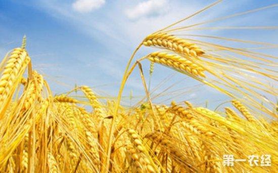 中国在俄种植农作物将放宽政策限制