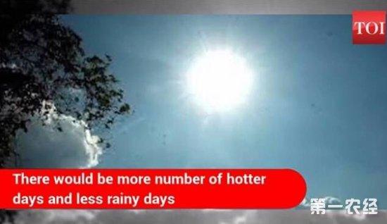 印度高温频繁雨天减少引农业缺水担忧