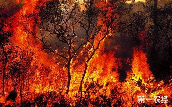葡萄牙发生森林火灾 已致24人遇难20人受伤