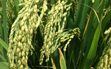 农业支持保护补贴落实过程中存在什么问题?有什么对策与建议?