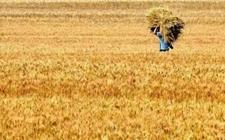 未来几年农业补贴的方向将有哪些转变?